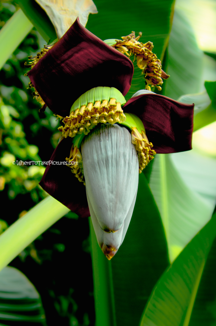 dc botanic garden